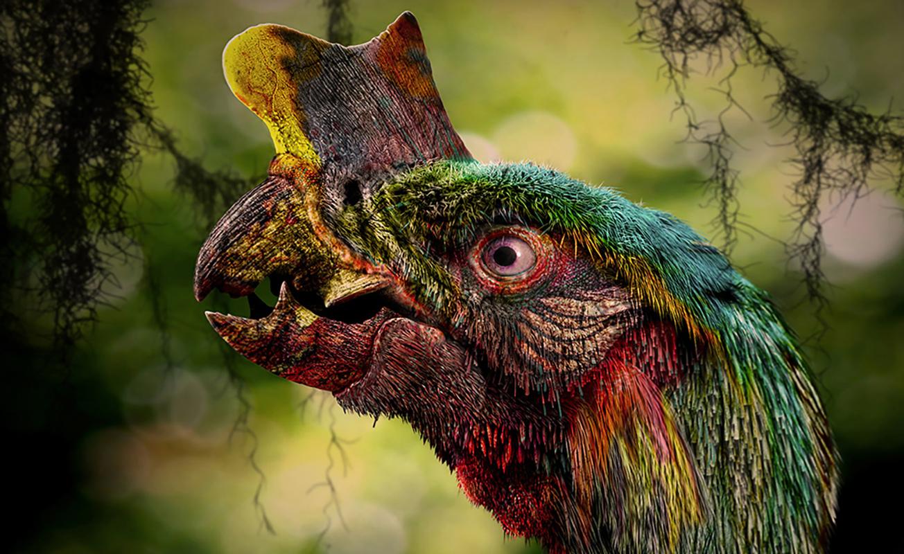 Tyrannornis rex – Copyright Marc Boulay