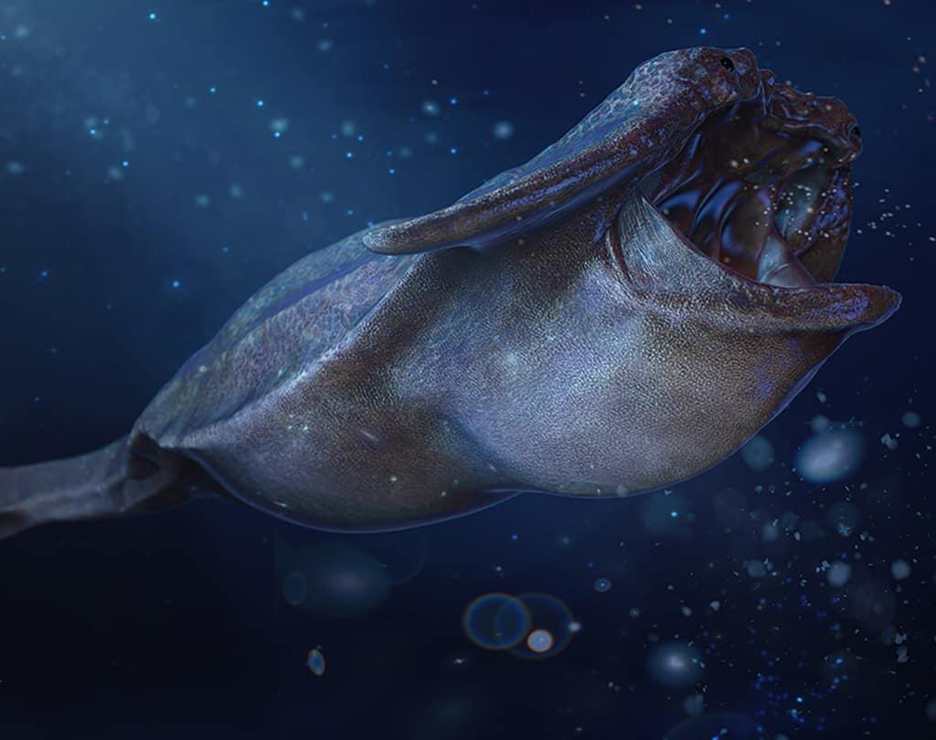 Benthogyrinus giganteus,le têtard géant des profondeurs — Demain, les animaux du futur — © Marc Boulay et Sébastien Steyer, 2015 — © Éditions Belin, 2015