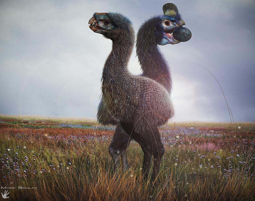 Neoviraptor brevirhynchus, le mangeur d'œuf du futur — Demain, les animaux du futur — © Marc Boulay et Sébastien Steyer, 2015— © Éditions Belin, 2015